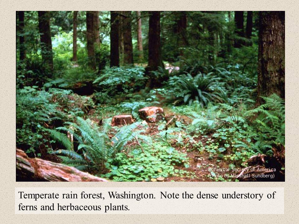 Temperate rain forest, Washington