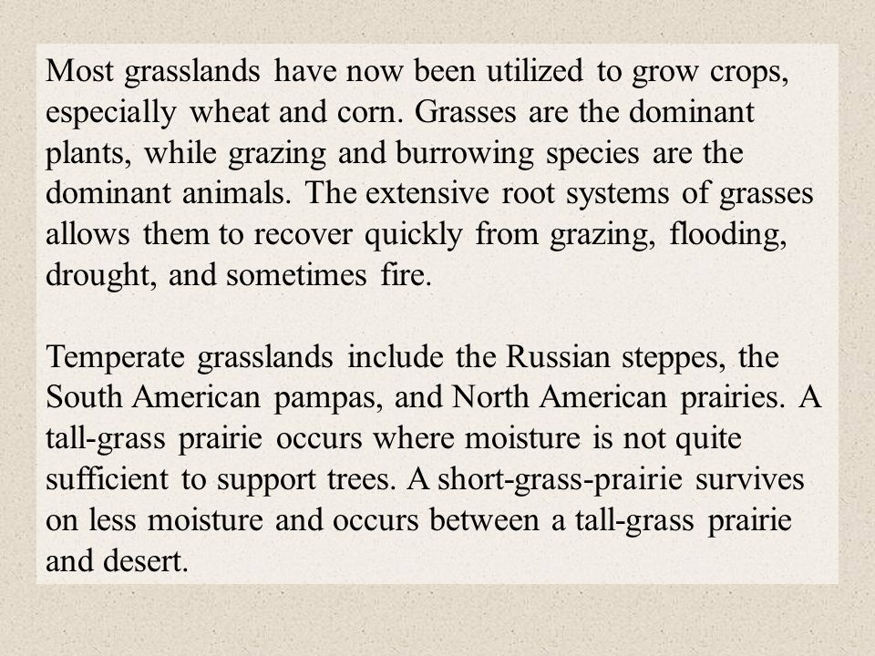 Most grasslands have now been utilized to grow crops, especially wheat and corn. Grasses are the dominant plants, while grazing and burrowing species are the dominant animals. The extensive root systems of grasses allows them to recover quickly from grazing, flooding, drought, and sometimes fire.