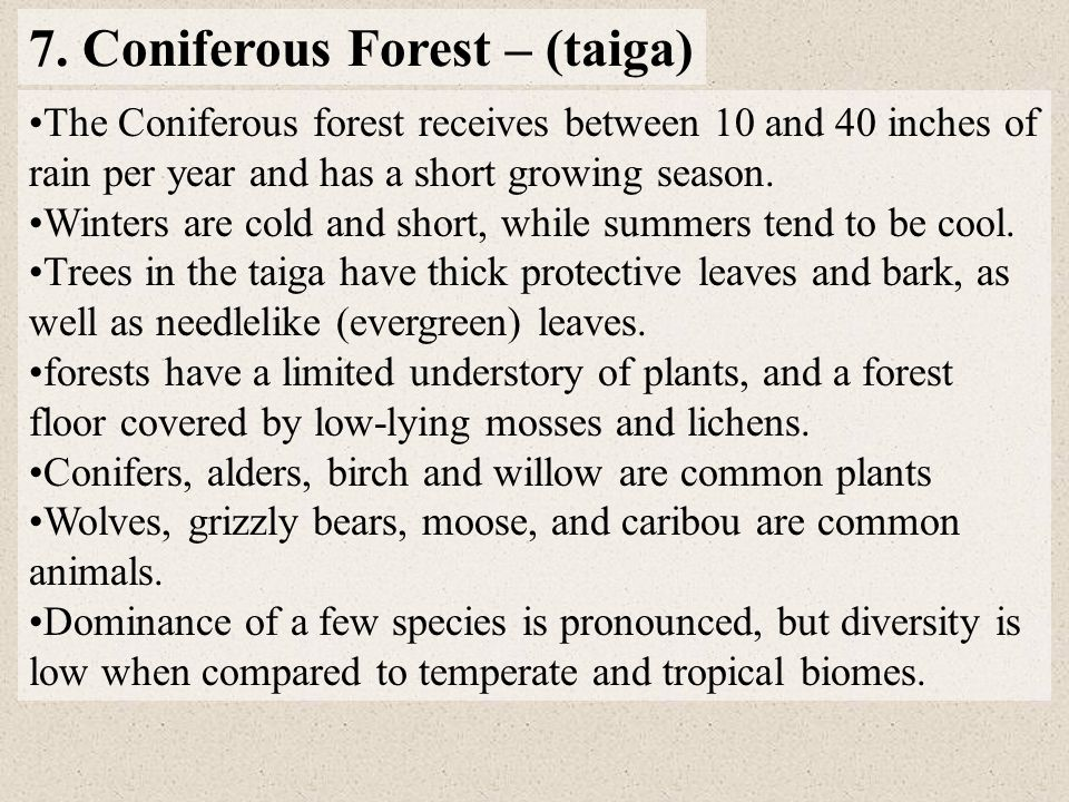 7. Coniferous Forest – (taiga)