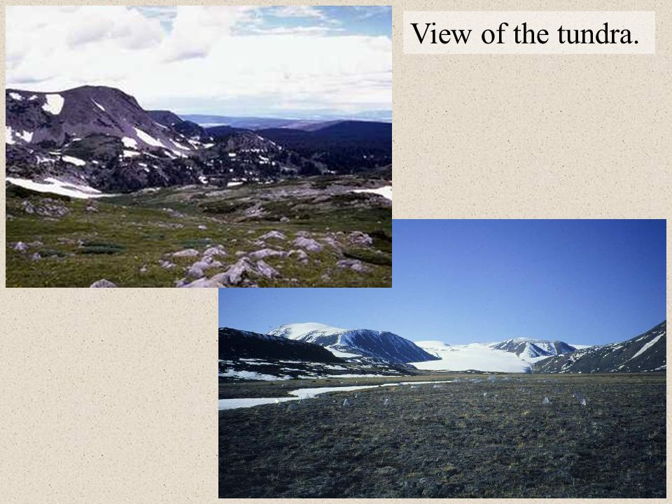 View of the tundra.