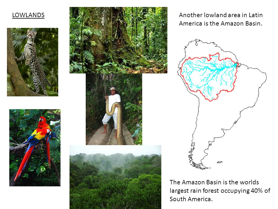 LOWLANDS Another lowland area in Latin America is the Amazon Basin.