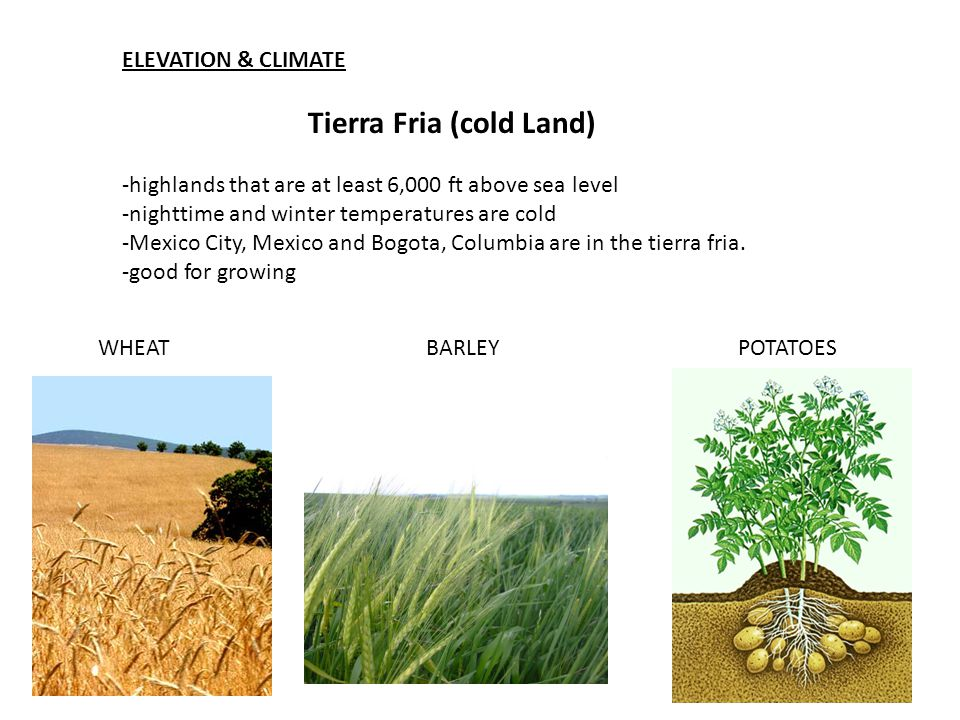 Tierra Fria (cold Land)