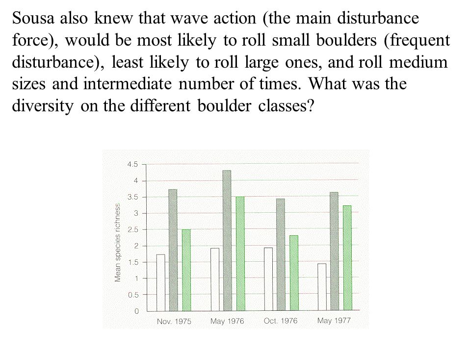 Sousa also knew that wave action (the main disturbance force), would be most likely to roll small boulders (frequent disturbance), least likely to roll large ones, and roll medium sizes and intermediate number of times.