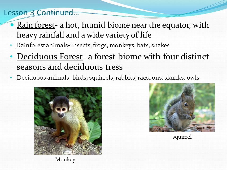 Lesson 3 Continued… Rain forest- a hot, humid biome near the equator, with heavy rainfall and a wide variety of life.