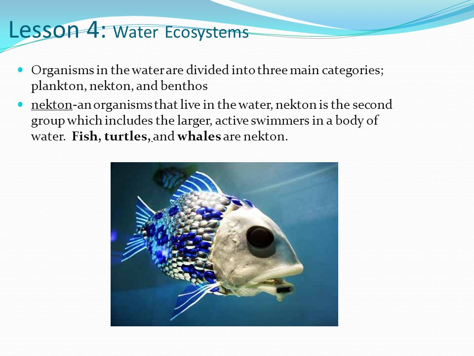 Lesson 4: Water Ecosystems
