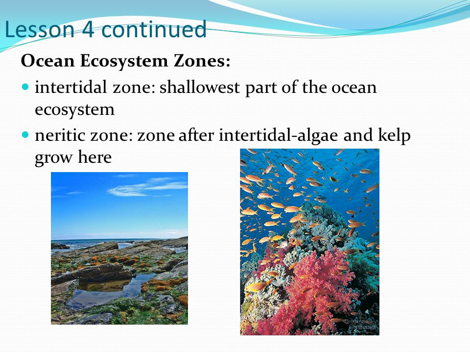 Lesson 4 continued Ocean Ecosystem Zones: