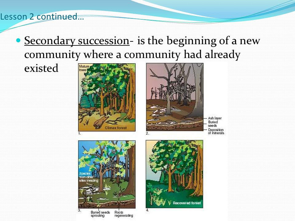 Lesson 2 continued… Secondary succession- is the beginning of a new community where a community had already existed.