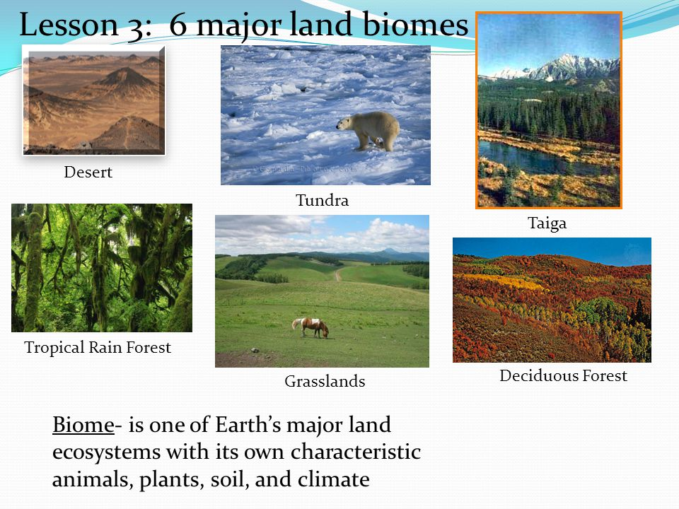 an overview of the characteristics of the deciduous forest biomes Biome characteristics biome definition: they have an extremely cold climate the veldt in south africa deciduous forest definition: a biome in eastern north america unit 5- summary pdf cs mains geography climate change for garlic people.