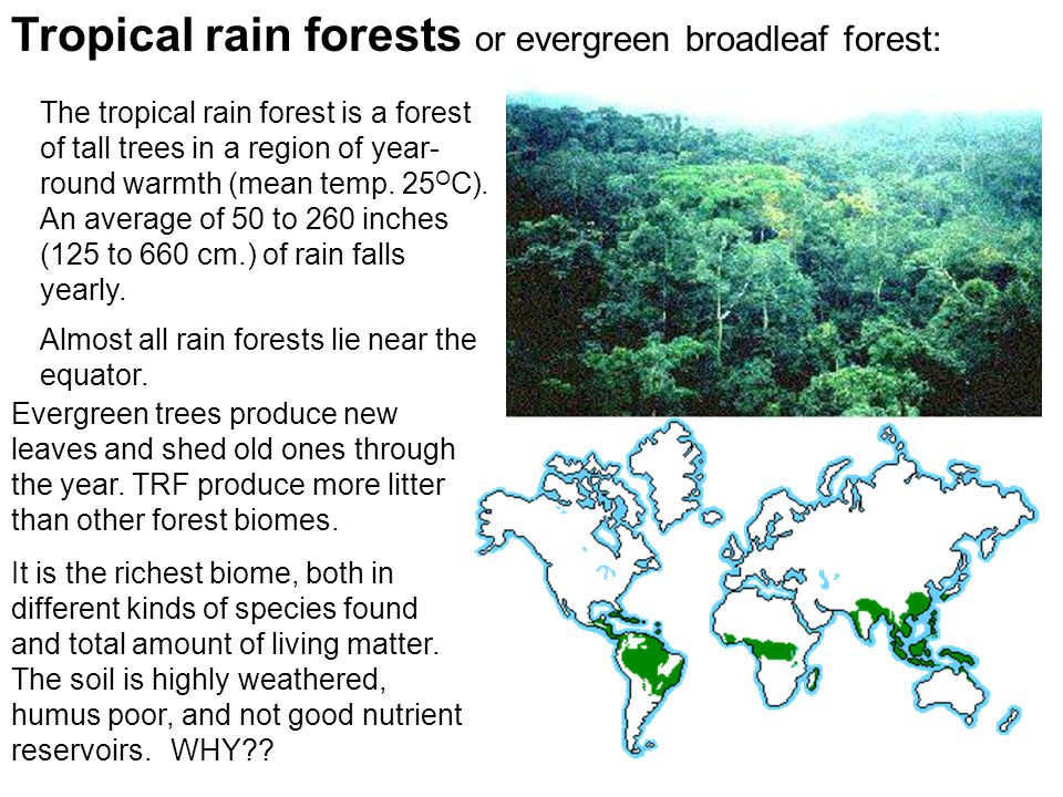 Tropical rain forests or evergreen broadleaf forest: