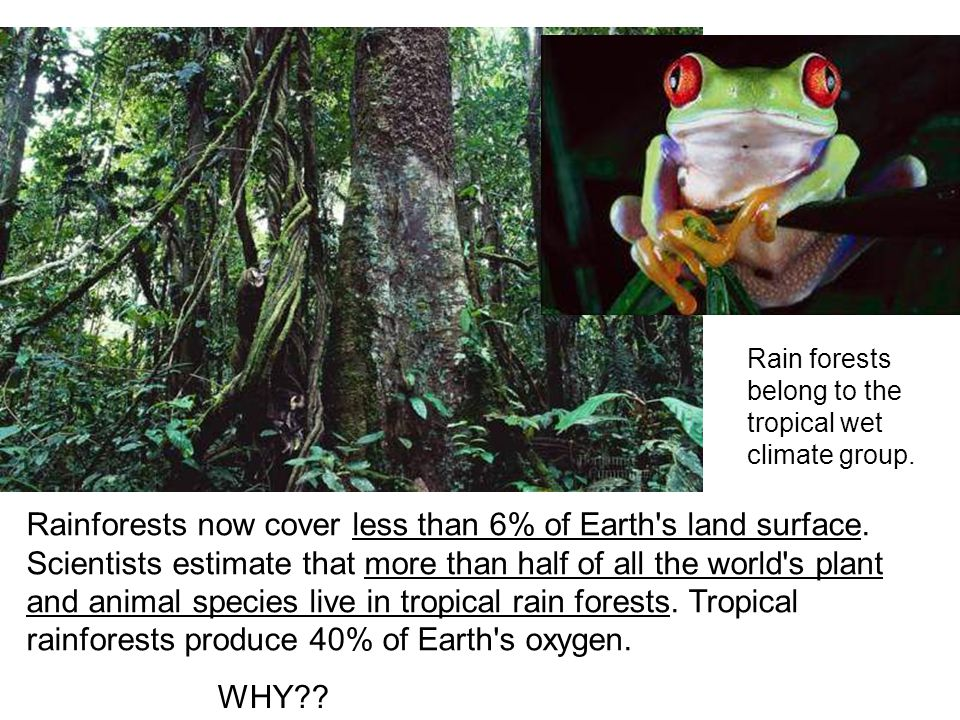 Rain forests belong to the tropical wet climate group.