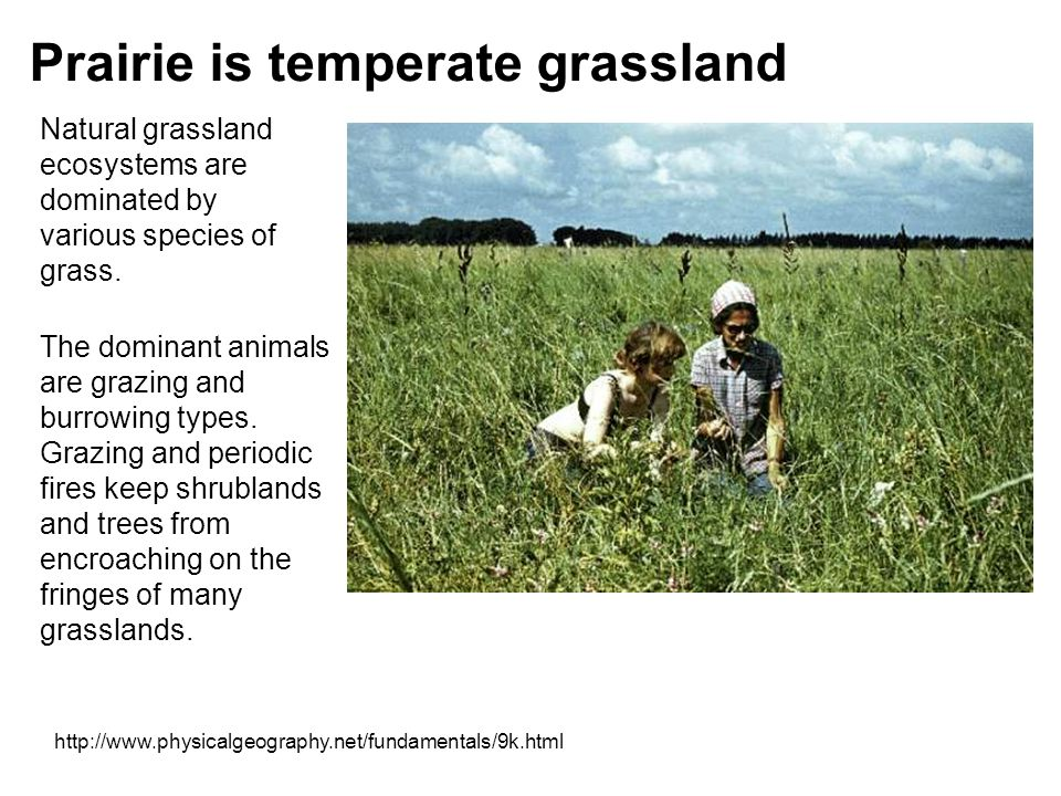 Prairie is temperate grassland