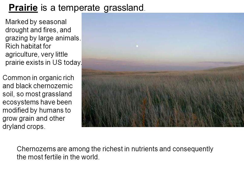 Prairie is a temperate grassland.