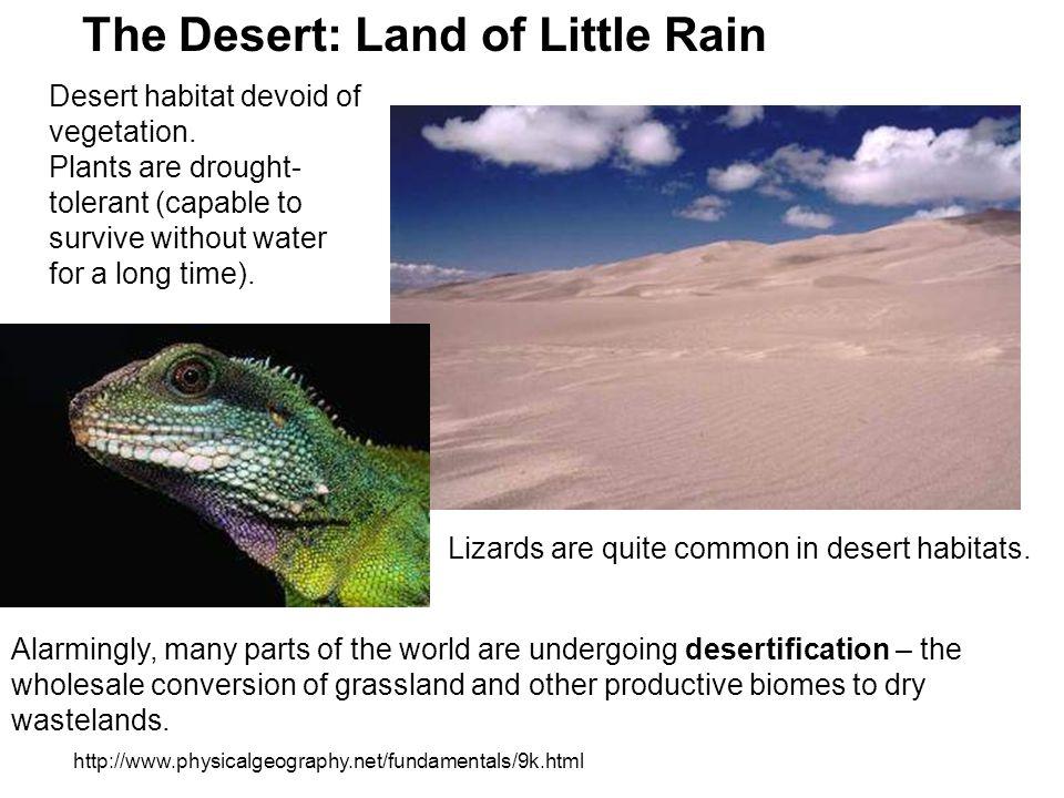 The Desert: Land of Little Rain