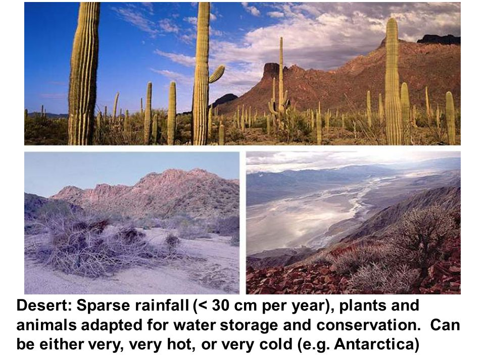 Desert: Sparse rainfall (< 30 cm per year), plants and animals adapted for water storage and conservation.