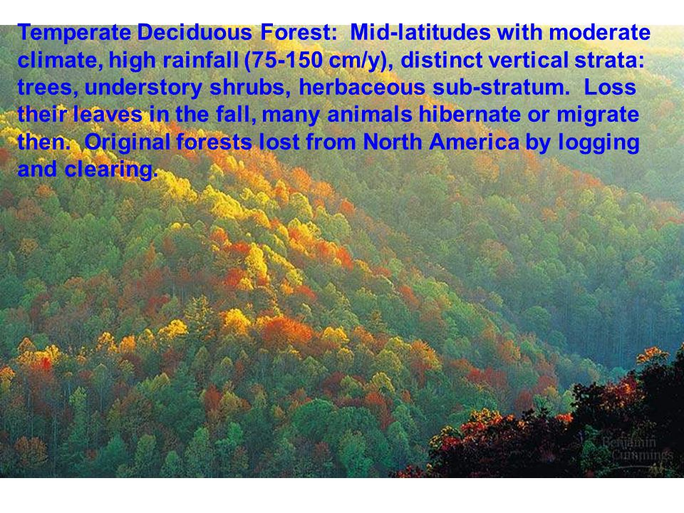 Temperate Deciduous Forest: Mid-latitudes with moderate climate, high rainfall (75-150 cm/y), distinct vertical strata: trees, understory shrubs, herbaceous sub-stratum.