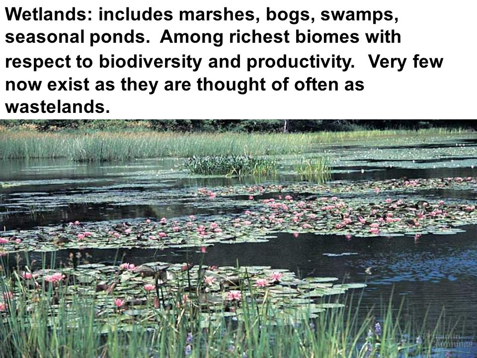 Wetlands: includes marshes, bogs, swamps, seasonal ponds