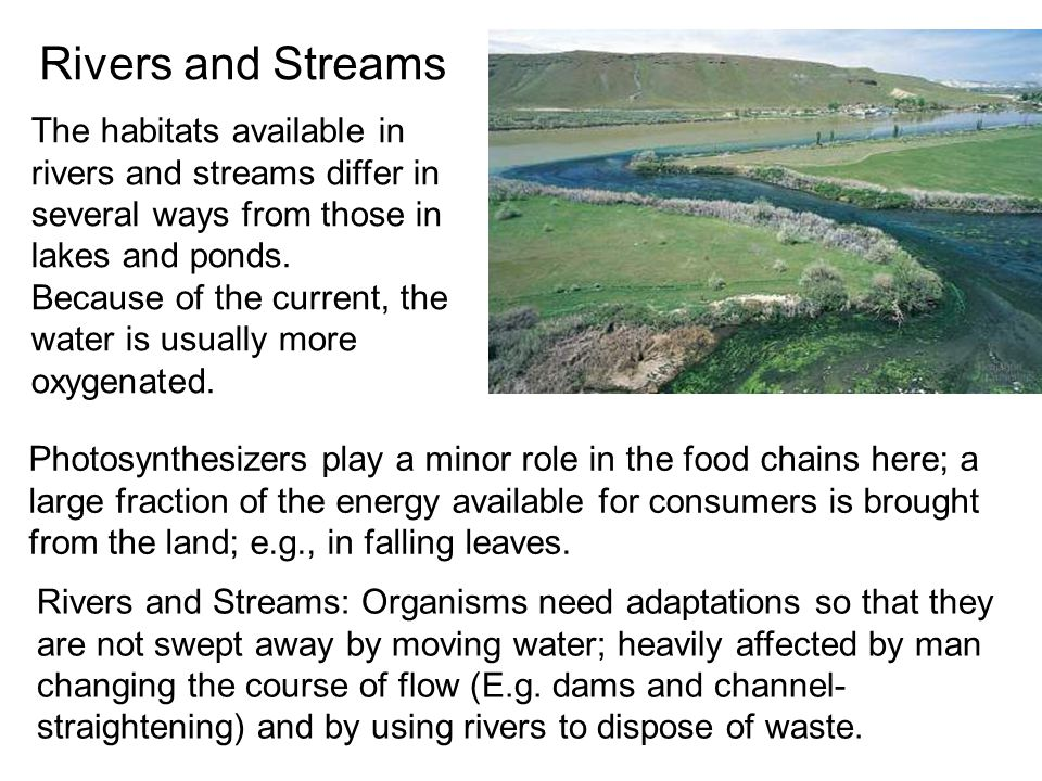 Rivers and Streams The habitats available in rivers and streams differ in several ways from those in lakes and ponds.