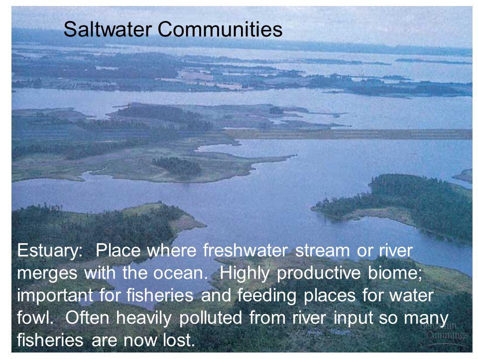Saltwater Communities