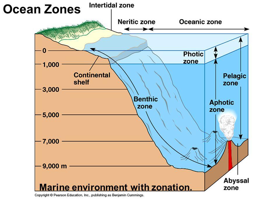 Ocean Zones Marine environment with zonation.