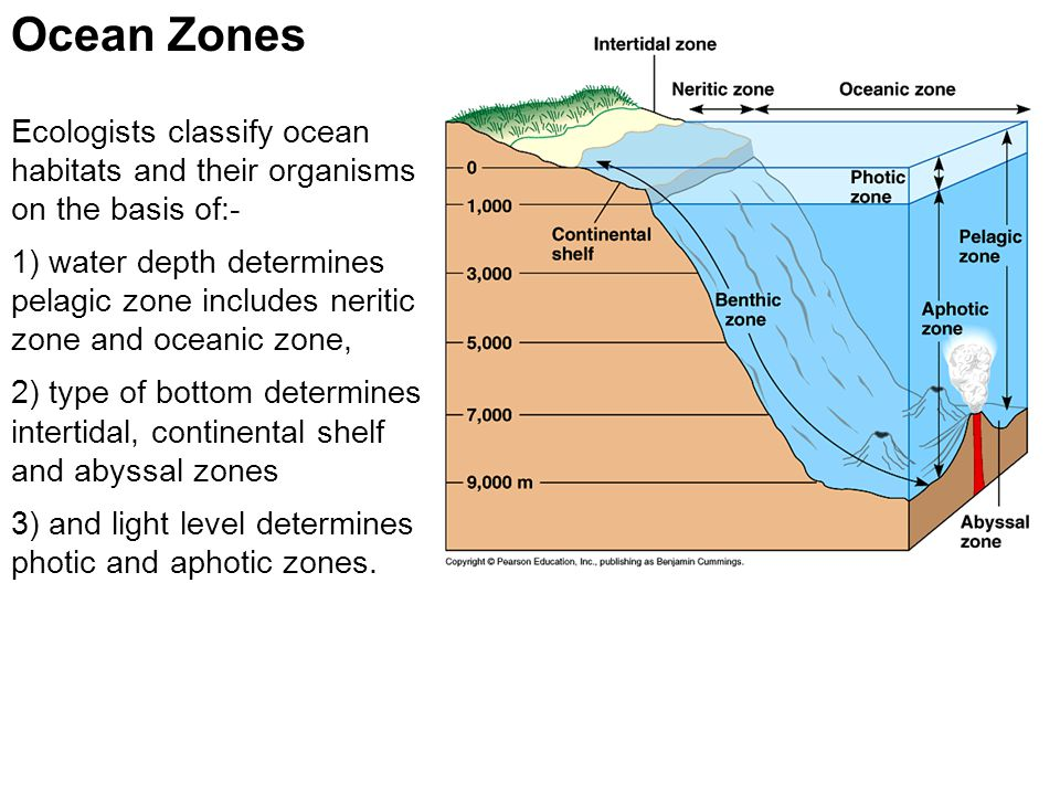 Ocean Zones Ecologists classify ocean habitats and their organisms
