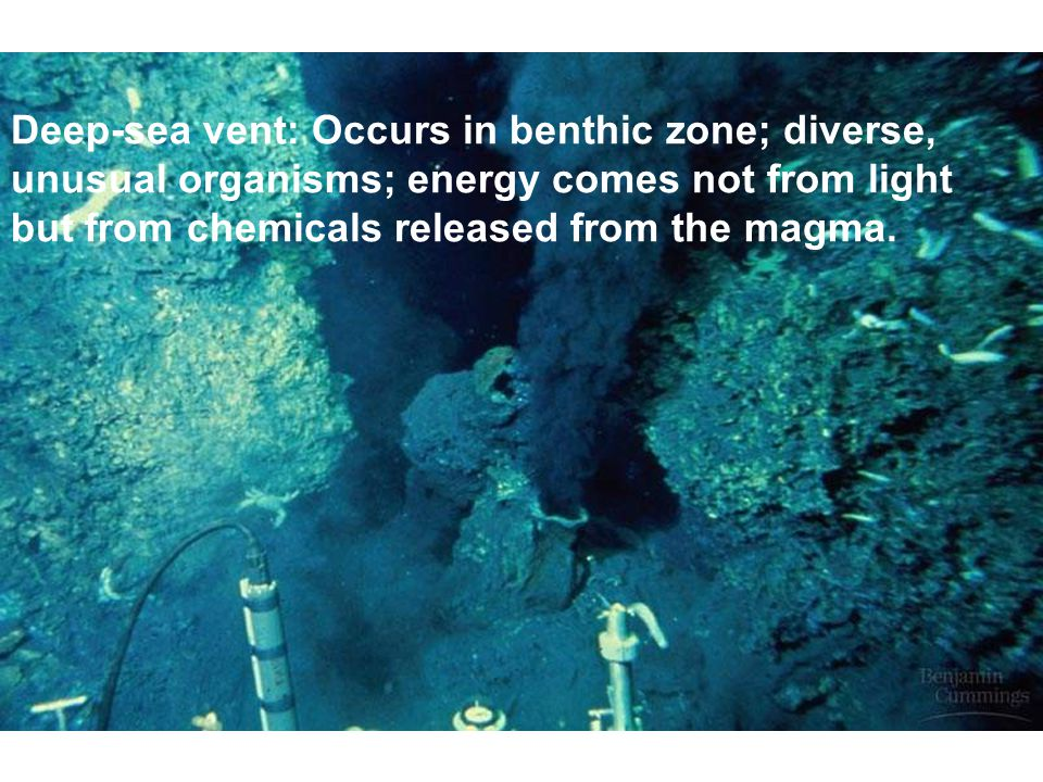 Deep-sea vent: Occurs in benthic zone; diverse, unusual organisms; energy comes not from light but from chemicals released from the magma.