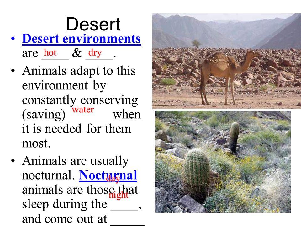 Desert Desert environments are ____ & ____.