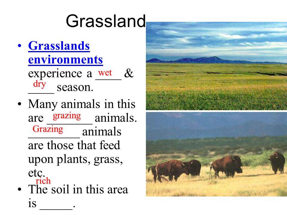 Grassland Grasslands environments experience a ____ & ____ season.