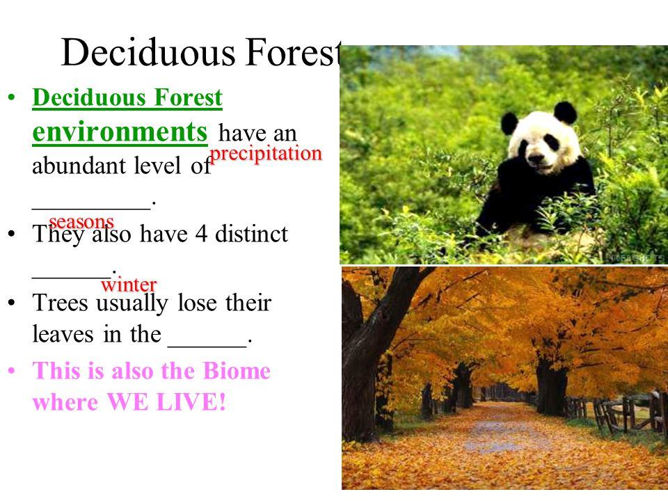 Deciduous Forest Deciduous Forest environments have an abundant level of _________. They also have 4 distinct ______.