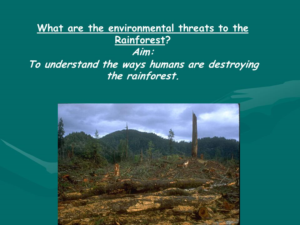 What are the environmental threats to the Rainforest Aim: