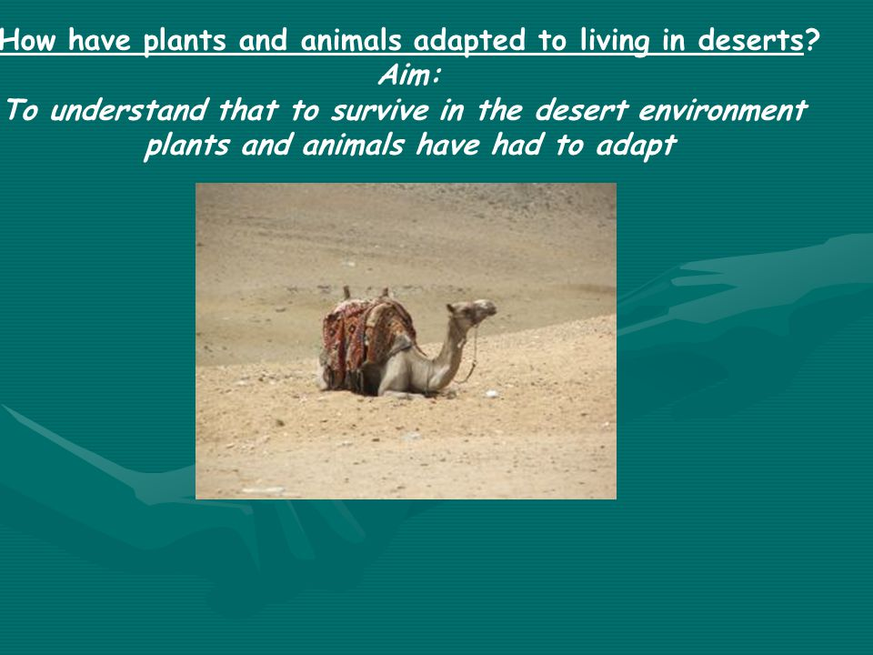 To understand that to survive in the desert environment