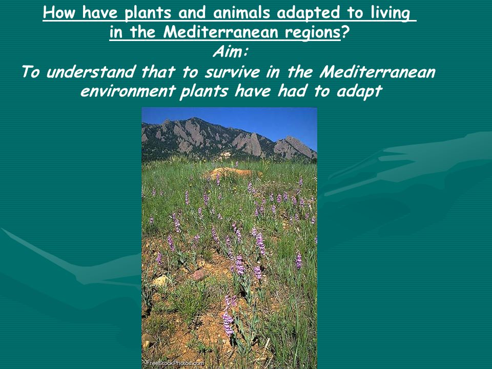 How have plants and animals adapted to living