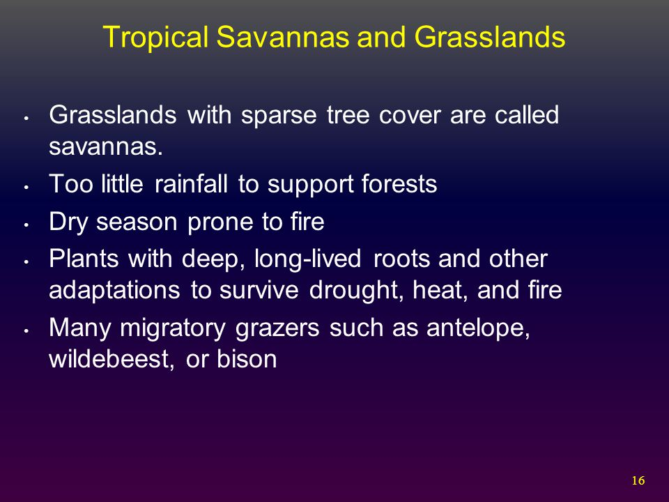Tropical Savannas and Grasslands