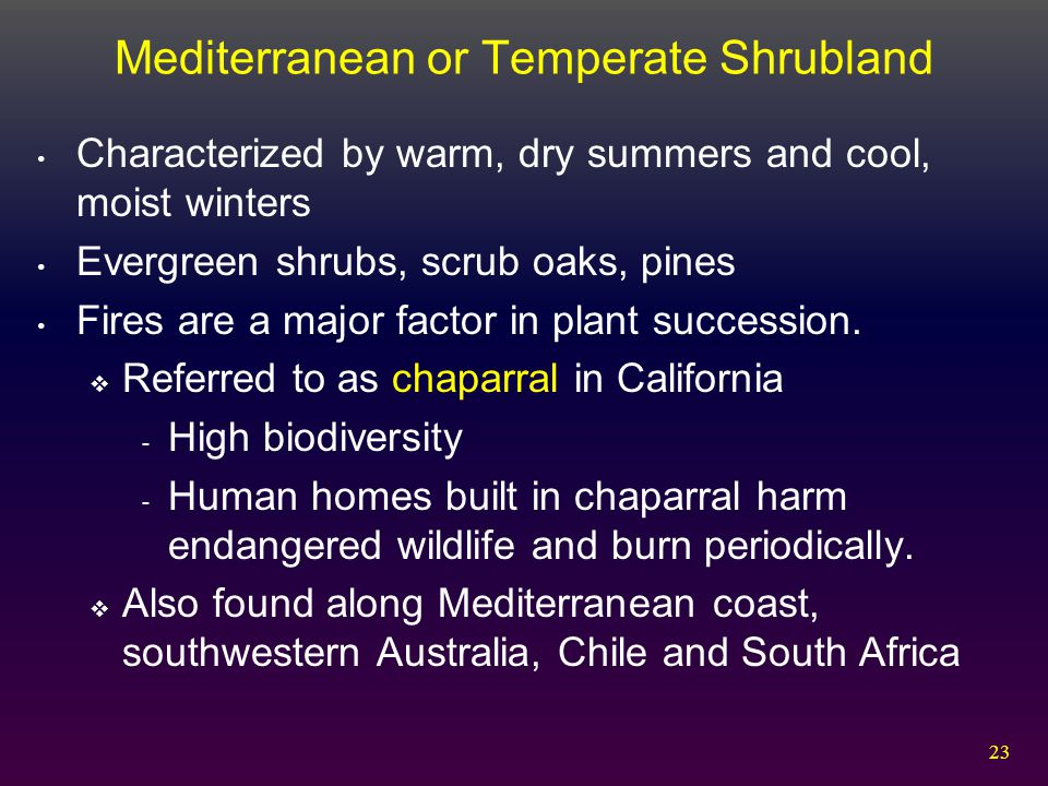 Mediterranean or Temperate Shrubland