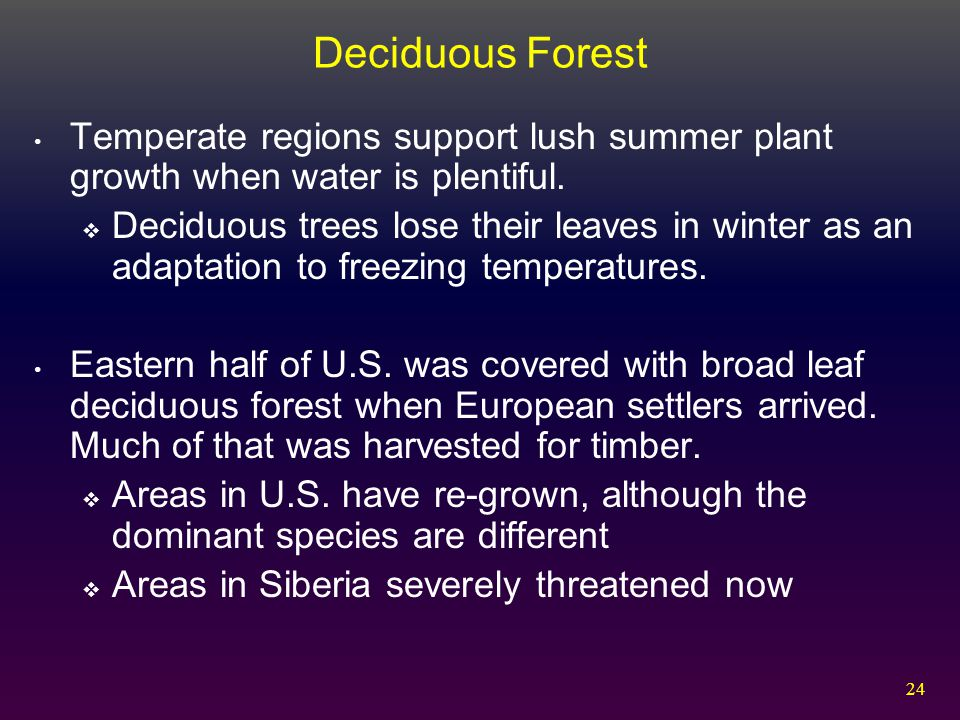 Deciduous Forest Temperate regions support lush summer plant growth when water is plentiful.