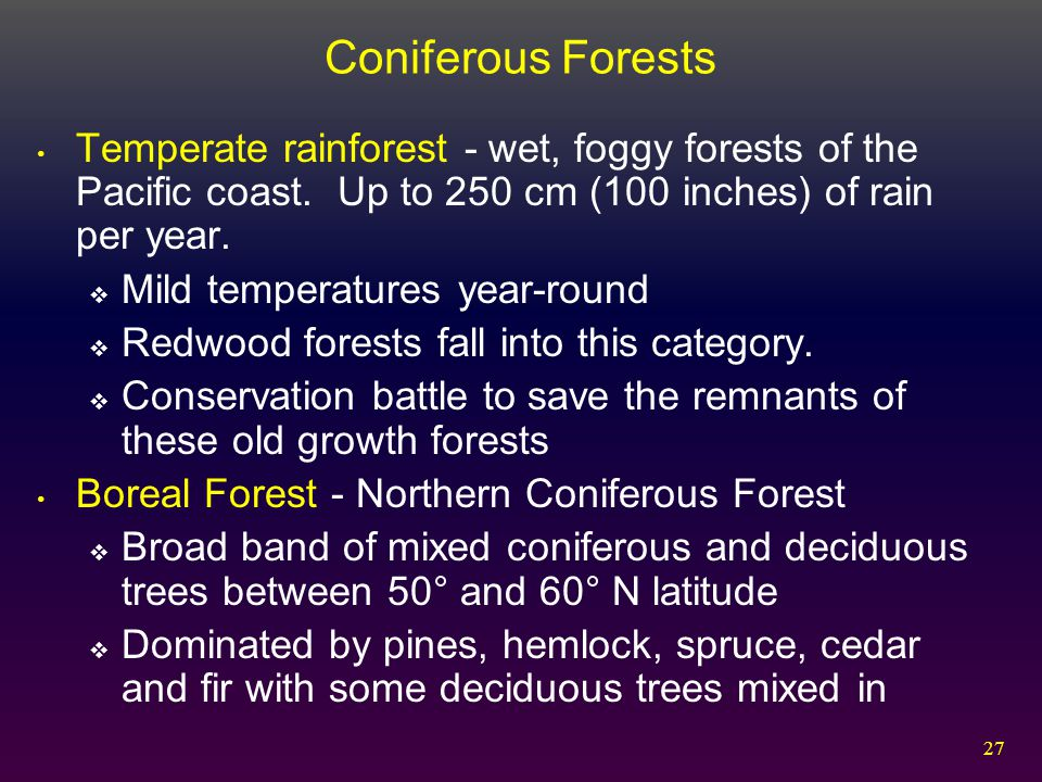 Coniferous Forests Temperate rainforest - wet, foggy forests of the Pacific coast. Up to 250 cm (100 inches) of rain per year.