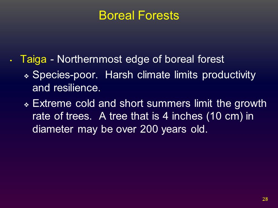 Boreal Forests Taiga - Northernmost edge of boreal forest
