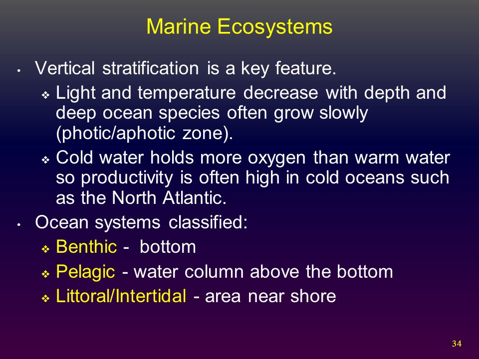 Marine Ecosystems Vertical stratification is a key feature.