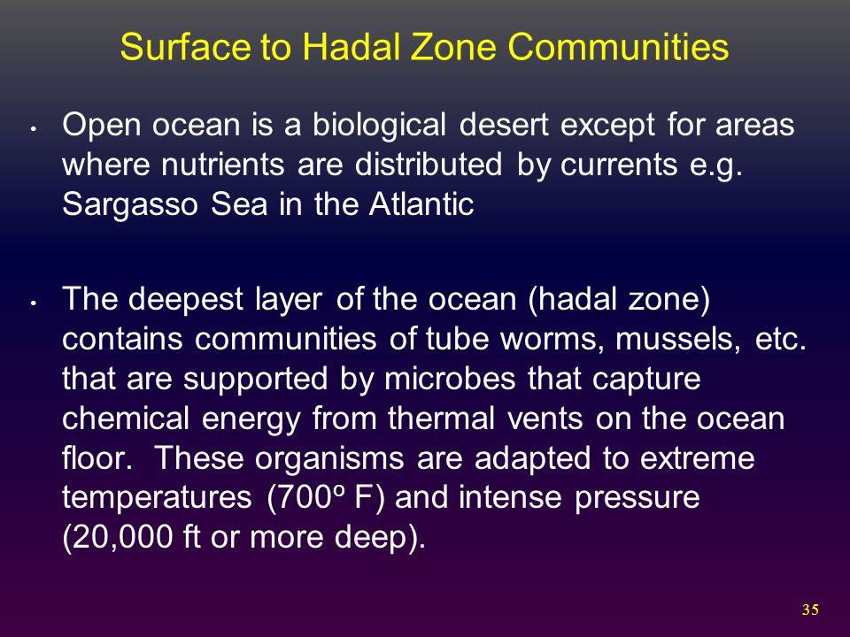 Surface to Hadal Zone Communities