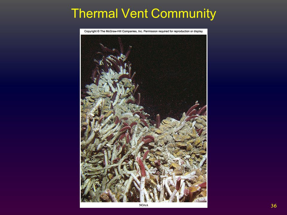 Thermal Vent Community