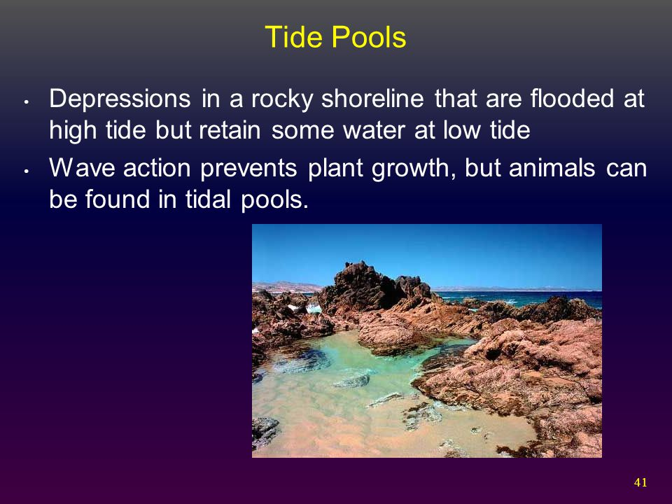 Tide Pools Depressions in a rocky shoreline that are flooded at high tide but retain some water at low tide.