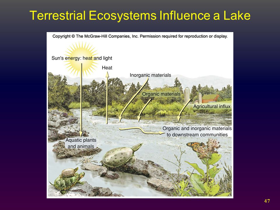 Terrestrial Ecosystems Influence a Lake