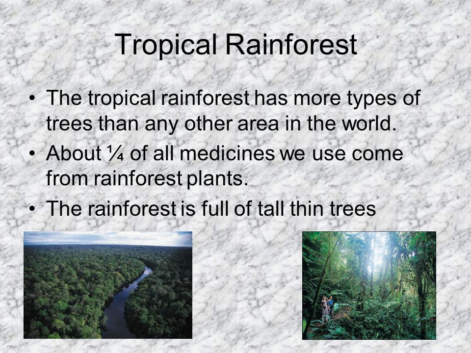 Tropical Rainforest The tropical rainforest has more types of trees than any other area in the world.