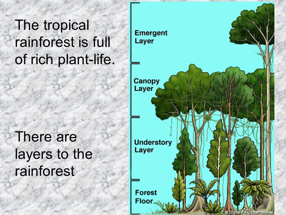 The tropical rainforest is full of rich plant-life.