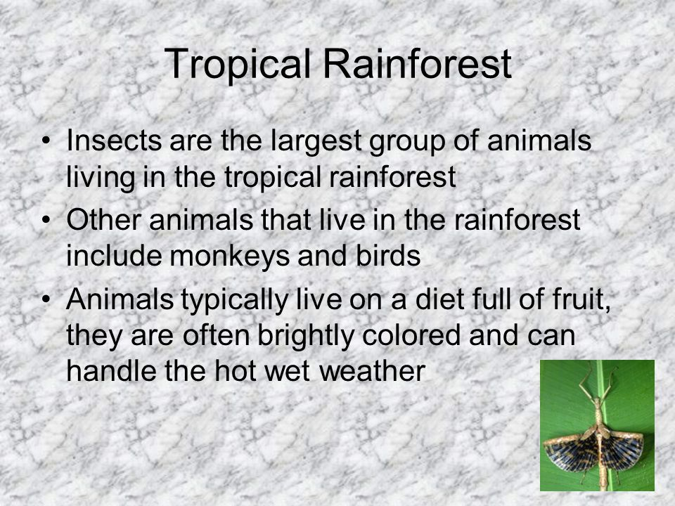 Tropical Rainforest Insects are the largest group of animals living in the tropical rainforest.
