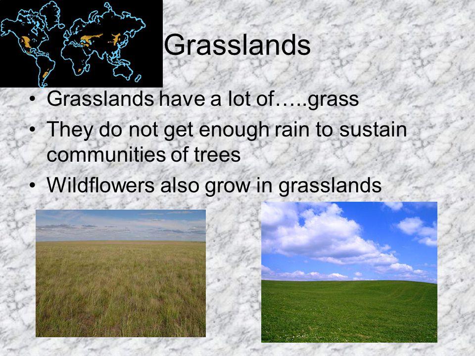 Grasslands Grasslands have a lot of…..grass