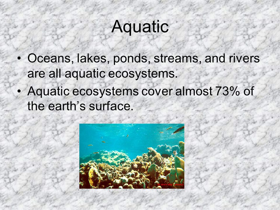 Aquatic Oceans, lakes, ponds, streams, and rivers are all aquatic ecosystems. Aquatic ecosystems cover almost 73% of the earth's surface.