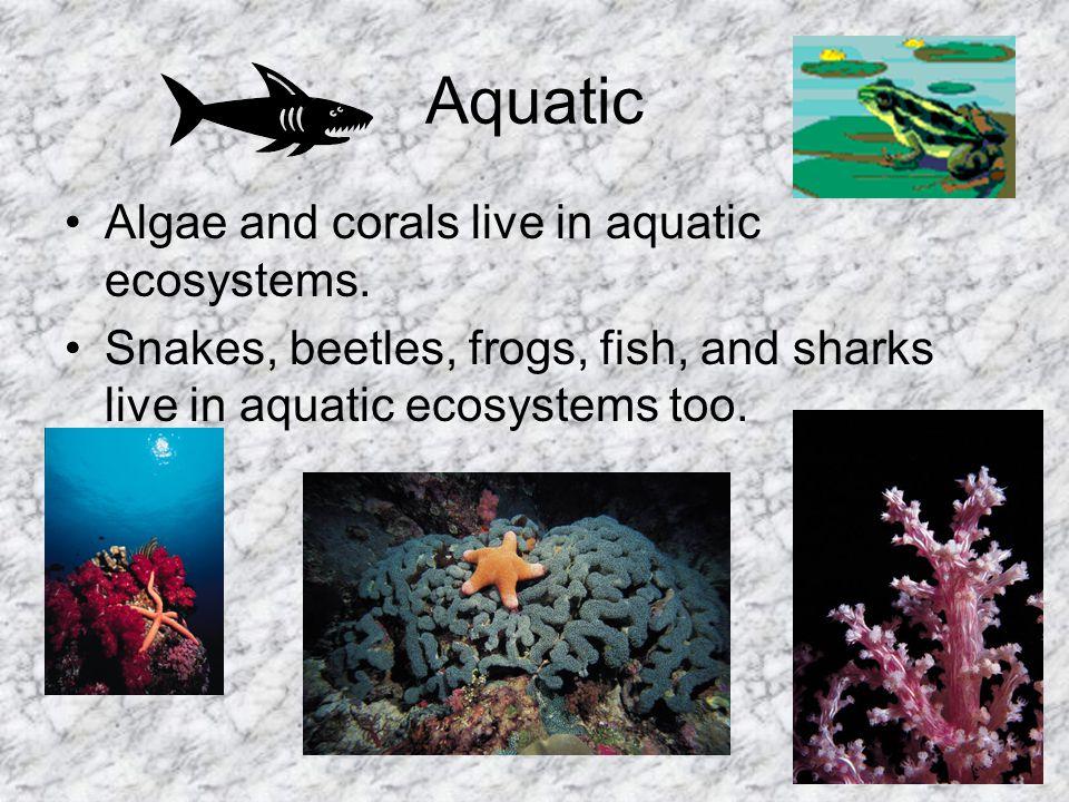 Aquatic Algae and corals live in aquatic ecosystems.