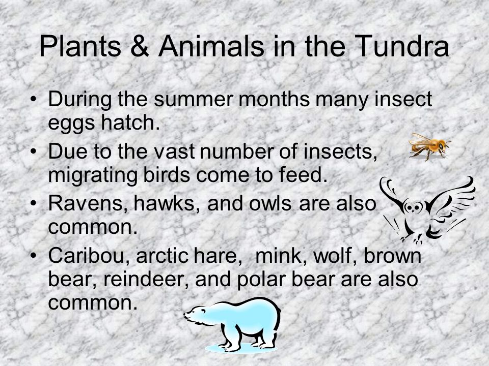 Plants & Animals in the Tundra