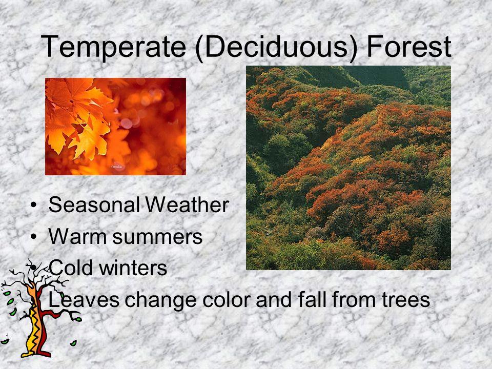Temperate (Deciduous) Forest