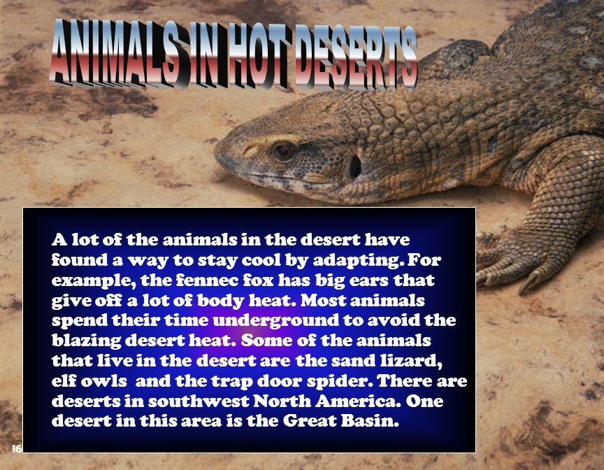 ANIMALS IN HOT DESERTS